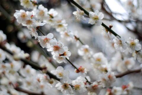 2008-03-02 1231.jpg